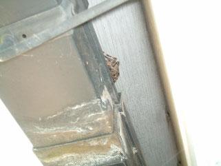 クモです。結構な大きさでした。