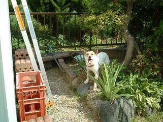 犬です。彼はアウトドア派です。