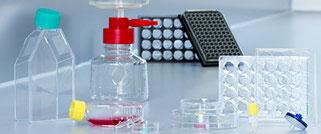 Cultivo de células & tejidos