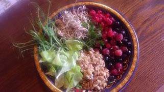 Salat Selbstversorger mit Sprossen, Erbsengrün, Petersilie und Johannisbeeren.