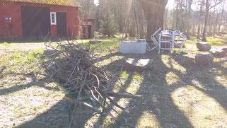 Viele Zweige sind beim letzten Sturm aus dem alten Ahorn gebrochen. Die müssen weggesammelt werden.