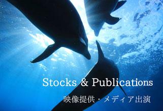 イルカ,ドルフィンスイムの水中写真,動画貸出履歴