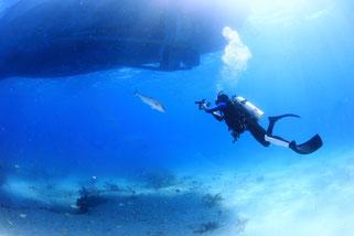 バハマドルフィンスイム:スキューバダイビング
