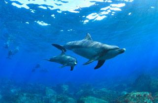 ドルフィンスイムで出会った親子イルカの写真