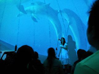 御蔵島のイルカを上映しているプラネタリウムドーム