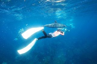 利島のドルフィンスイムではイルカとスイマーの写真を撮影