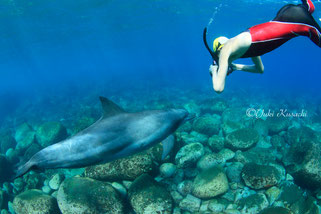 御蔵島のイルカとドルフィンスイム写真撮影