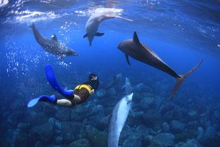 御蔵島でイルカと泳ぐドルフィンスイム
