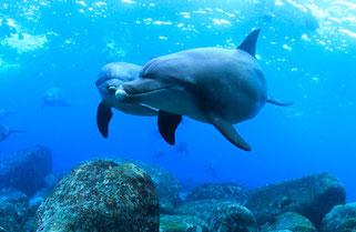 御蔵島の玉石とイルカ(御蔵島ドルフィンスイム)