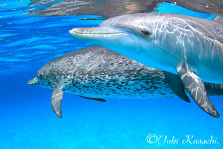 バハマドルフィンスイム:子供イルカ