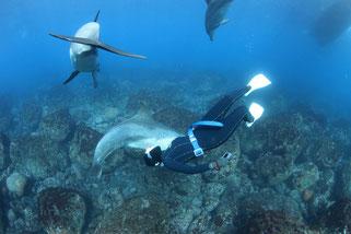 利島でイルカと遊ぶドルフィンスイマー