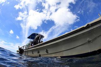御蔵島のドルフィンスイム船