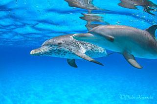 バハマドルフィンスイム:親子イルカ