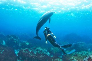 利島ドルフィンスイム:イルカとドルフィンスイマー