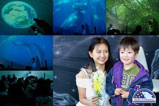 イルカ×プラネタリウム:御蔵島のイルカとドルフィンスイムの様子