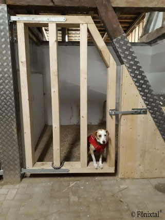 Islandpferdehof Fönixtal - Hund in einer der Notboxen