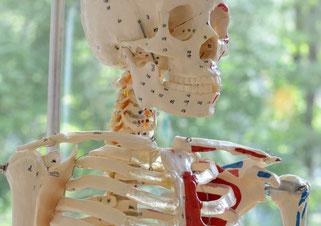 CMD beim betrachten des Knochenaufbaus sieht man das Zusammenspiel