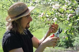Garten Regisseur, in München, Augsburg, Landsberg am Lech, Gartenbau und Landschaftsbau, Obstbaumschnitt, Gartenpflege, Obstschnitt, Apfelbaum