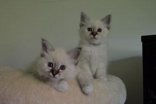 Lancelot und Levin
