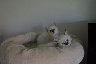 Levin und Lancelot