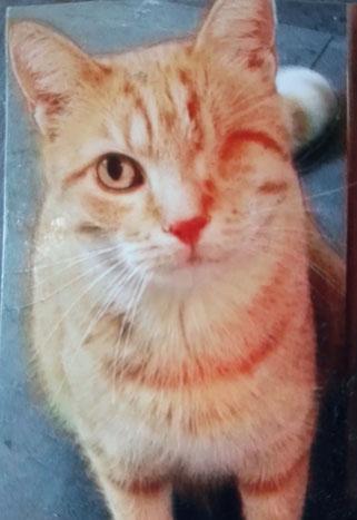 Seit dem 26. Mai wird Garfield von Familie Eisener vermisst.