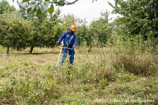 Gegen besonders widerstandsfähige Vegetation kam in diesem Jahr erstmals auch eine Motorsense zum Einsatz.