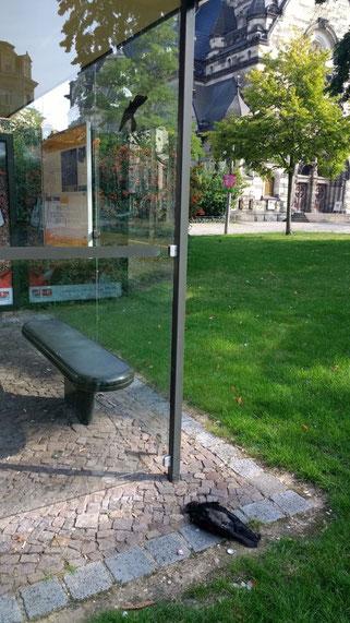 Nordplatz: Aufgeklebte Vogelsilhouetten sind leider wirkungslos und können tödliche Kollisionen nicht verhindern.