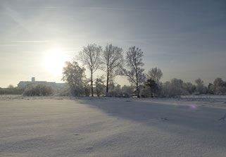 Winter am Federsee
