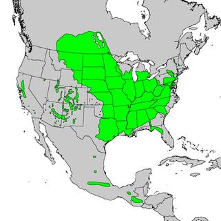 Verbreitungskarte Quelle: Wikimedia commons