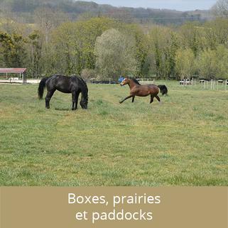boxes, prés, paddocks, le cadre de vie des chevaux à l'Ecurie des 2R