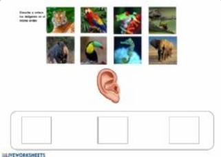 ESCUCHA Y COLOCA EN EL MISMO ORDEN   (Memoria auditiva)