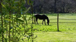 Venez en vacances au gîte le Rouch avec votre cheval!