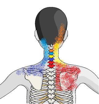 くび肩の痛みと関連する関節