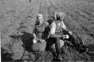 Kartoffelernte in Hardebek