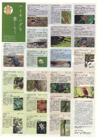 名護岳で見られる代表的な動植物やハイキングの際の注意事項も掲載