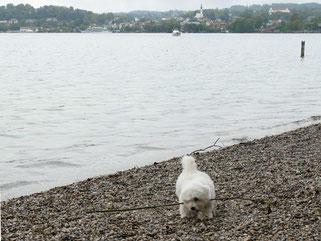 Klein-Fynn am großen Starnberger See