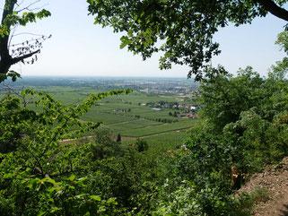 Blick von der Haardt in die Rheinebene bei Neustadt a.d.W.