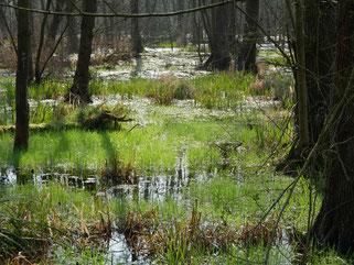 Hoher Grundwasserspiegel im Bruch