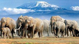 Kenya Safari. Amboseli National Park
