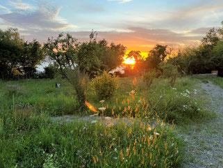 Naturschaugarten bei der Silvesterkapelle, Foto: Wolfgang Rauneker