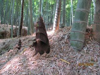 竹の径にて