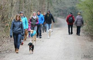Alle Hunde laufen bei ihrem Menschen wenn andere ihnen begegnen