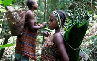 Tradicionalmente, pequeñas comunidades 'pigmeas' se trasladaban con frecuencia por territorios forestales y recogían gran variedad de frutos del bosque, recolectaban e intercambiaban productos con sociedades vecinas sedentarias. © Selcen Kucukustel/Atlas
