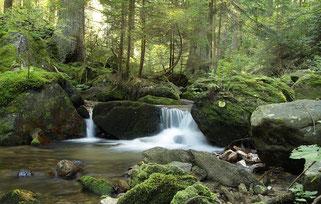 Boubinsky-Bach im Naturreservat Certova stena, Tschechische Republik