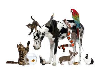Tierschutz - Jedes Leben zählt
