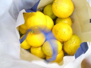 いただいた国産レモン