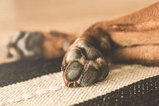 Die Pfote eines Hundes ist oft sauberer, als der Charakter mancher Menschen.