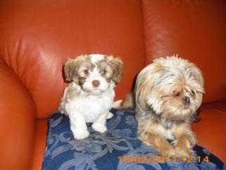 Lotta ist gerade angekommen und schon mit  Merel auf dem Sofa:-)