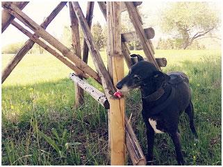 Hund sucht Objekt