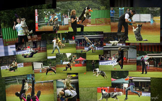 Dompokal 2016 - Dogfrisbee